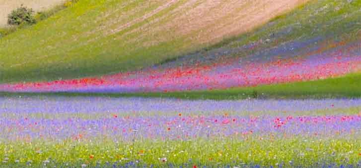 Un�imperdibile opera d�arte dipinta da madre natura