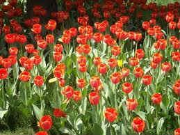 offerte aprile